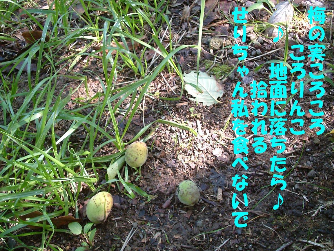 b0069163_15141392.jpg