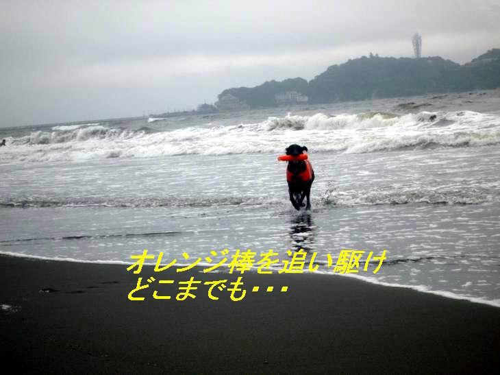 a0104464_13433416.jpg