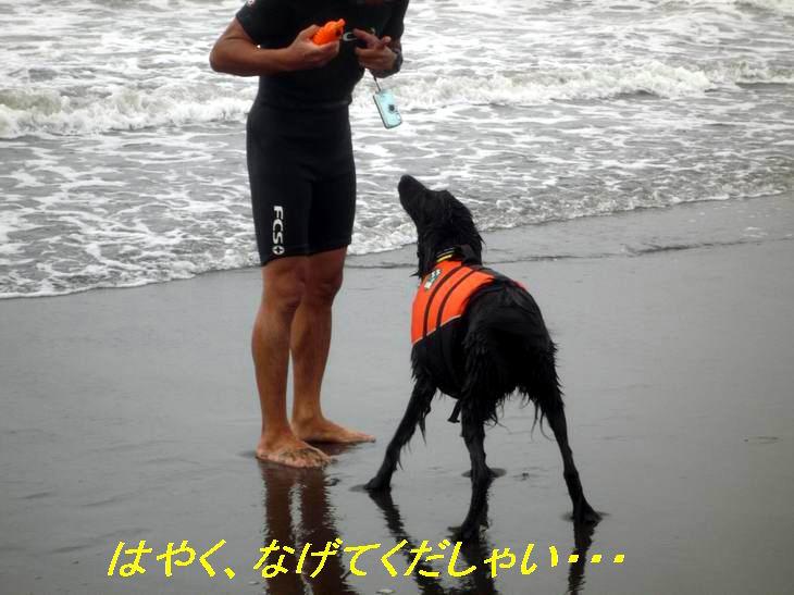 a0104464_1345788.jpg