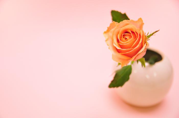 バラ トスカニーニ ピンク