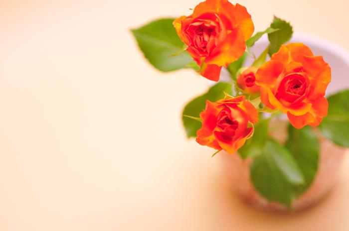 スプレーバラ ベイブ オレンジ