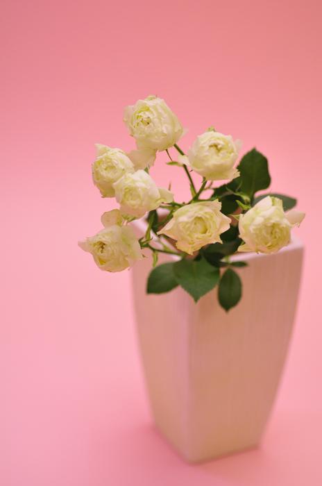 スプレーバラ ホワイトマカロン 白