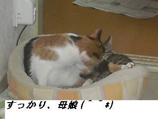 b0112380_18482779.jpg