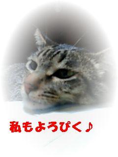b0146688_11374731.jpg