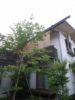 OM地域型住宅研究会_f0059988_10243838.jpg