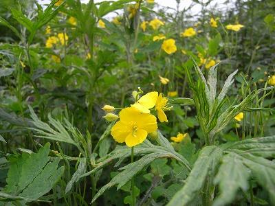 夏至の日、青葉公園8Kmコースの植物_f0138096_21244246.jpg