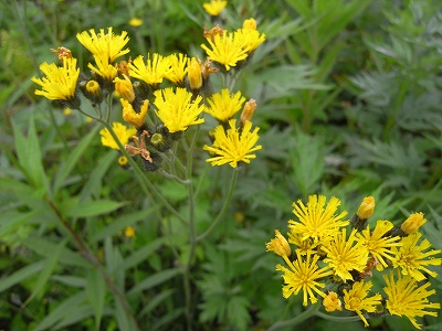 夏至の日、青葉公園8Kmコースの植物_f0138096_21245364.jpg
