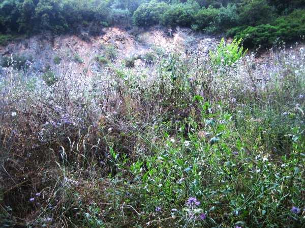 雨季の後のコルセローラ_b0064411_17245694.jpg