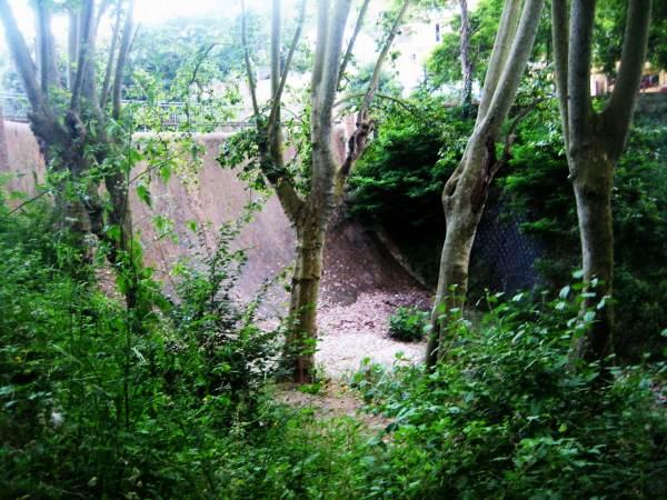 雨季の後のコルセローラ_b0064411_1730959.jpg