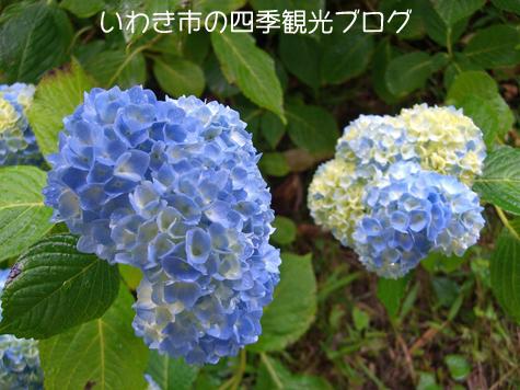 f0105342_1833477.jpg