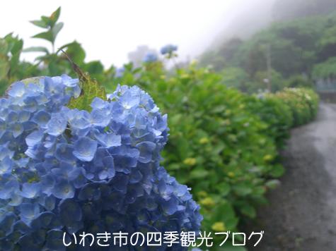 f0105342_1863993.jpg
