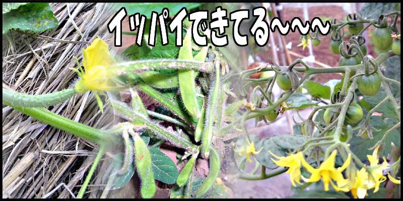 おばチャンちへGO→→→_f0119369_15412248.jpg