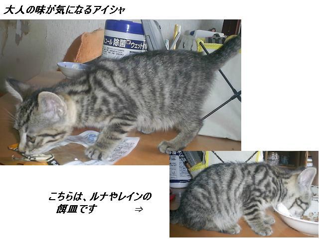 b0112380_11423530.jpg