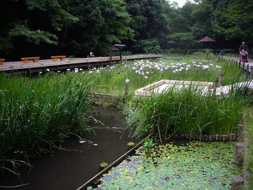 東高根森林公園 20086,20_e0108897_0401316.jpg