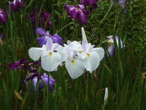 東高根森林公園 20086,20_e0108897_0411550.jpg