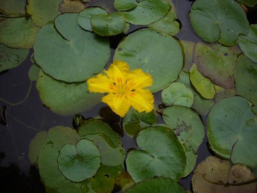 東高根森林公園 20086,20_e0108897_042338.jpg
