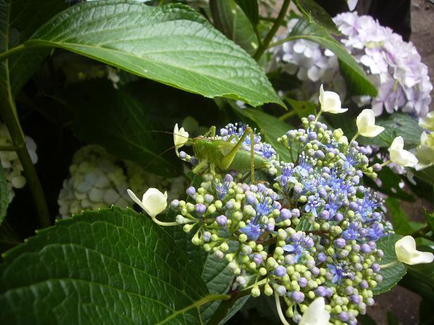 東高根森林公園 20086,20_e0108897_04331.jpg