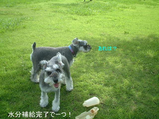 d0079701_19575198.jpg