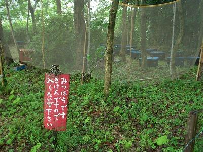 須津の里山でまったり、じゃなくてビッショリ!_f0141310_23495896.jpg