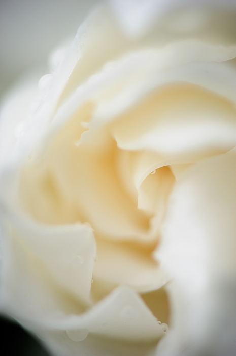 甘い匂いに誘われて♪_f0032011_19472192.jpg