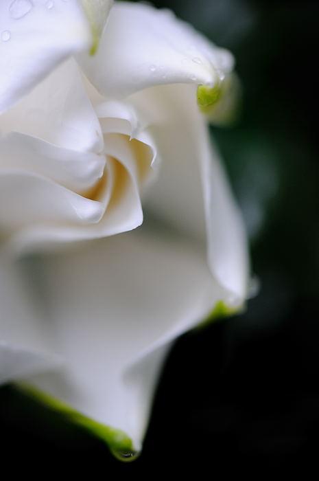 甘い匂いに誘われて♪_f0032011_1948489.jpg