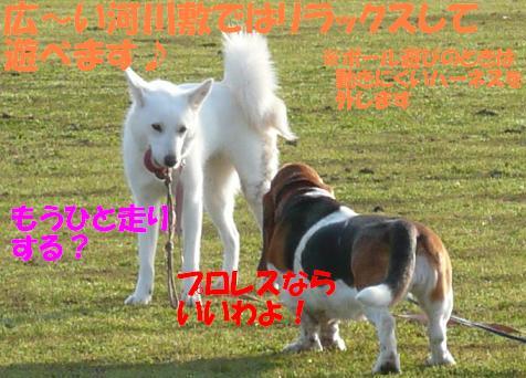 f0121712_16251290.jpg