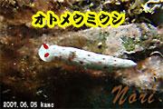 珍しいタテジマウミウシ亜目・科(^^♪_b0044726_1640614.jpg