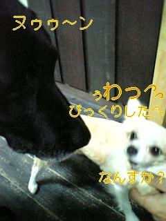 f0148927_192764.jpg