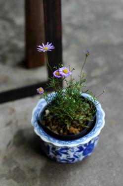 花だらけ~**_a0082146_2172784.jpg