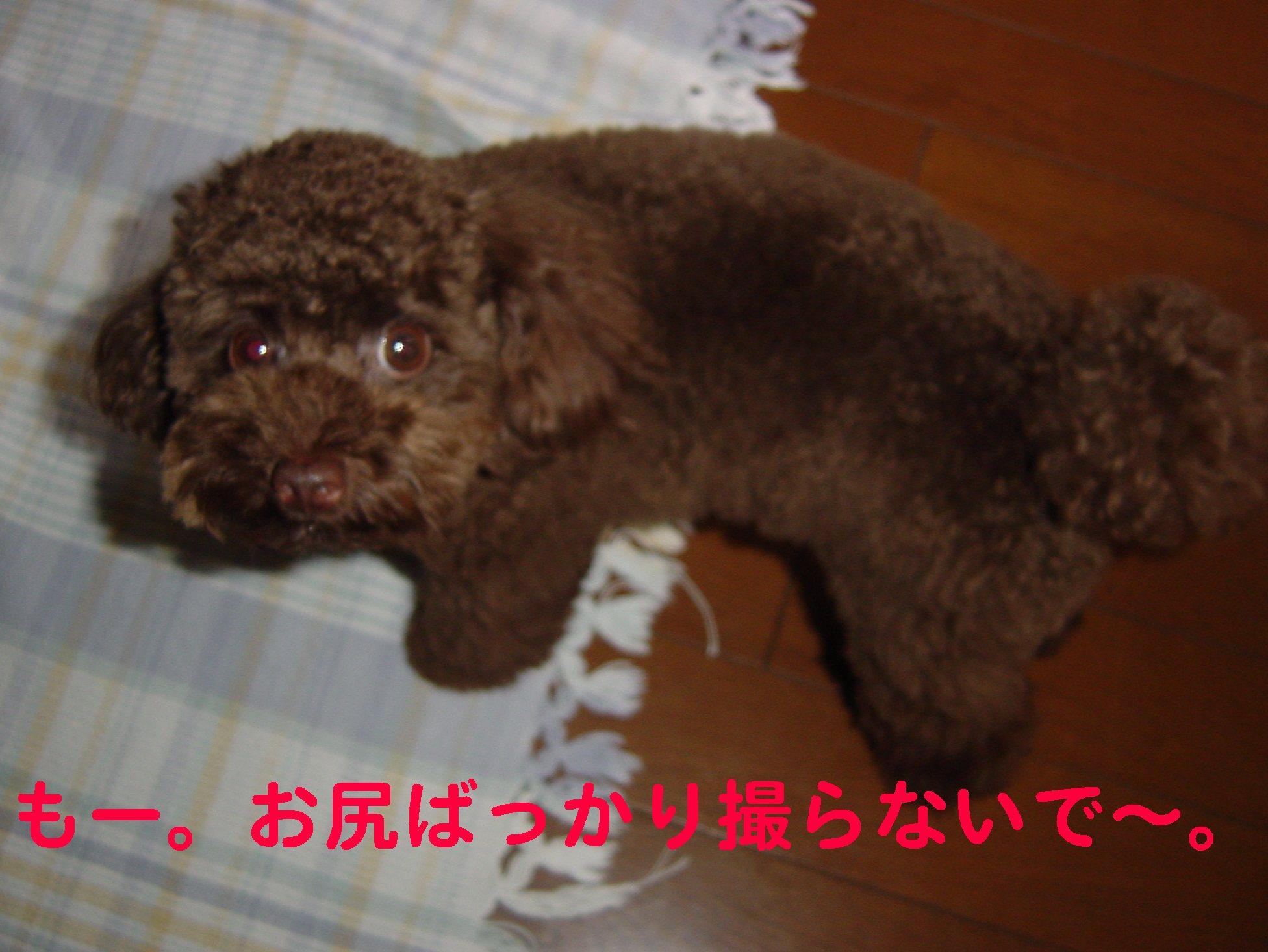 f0160757_161524.jpg