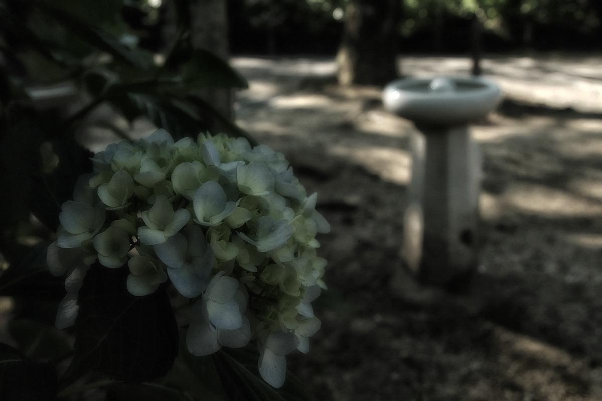 奈良 矢田寺 <紫陽花>  6_f0021869_11132557.jpg