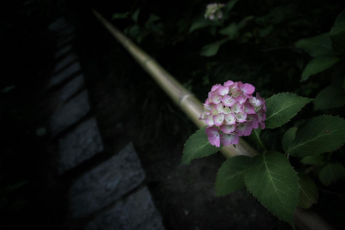 奈良 矢田寺 <紫陽花>  6_f0021869_11153295.jpg