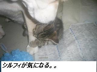 b0112380_20354636.jpg