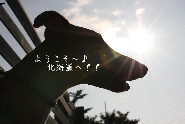b0124595_20505944.jpg