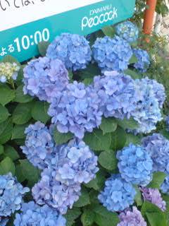 d0048818_23193632.jpg