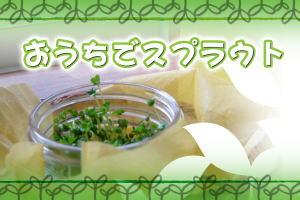 ♪新鮮 発芽野菜通信「ドレミの日」♪_d0063218_111599.jpg