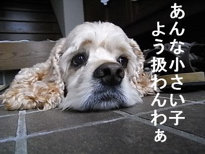 b0140342_15401869.jpg