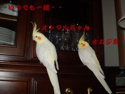 f0172650_23151042.jpg