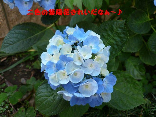 c0134862_21485773.jpg