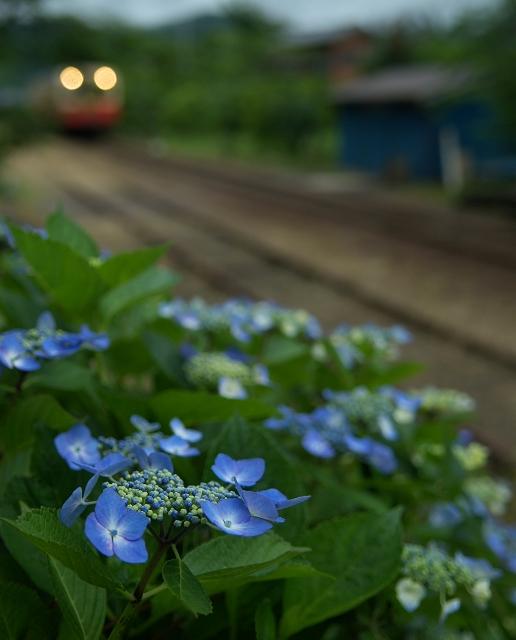 紫陽花の咲く駅 ~梅雨の高滝駅~_f0018464_21575141.jpg