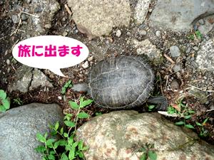 f0132070_20355692.jpg