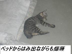 b0112380_1942028.jpg
