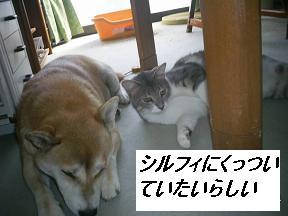 b0112380_1951221.jpg
