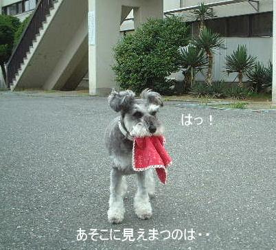d0079701_20102619.jpg