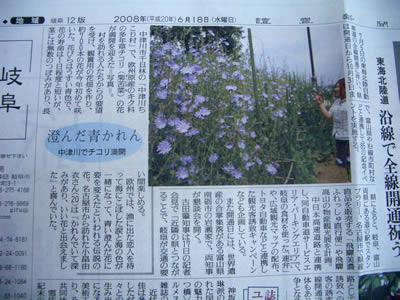 読売新聞にチコリの花掲載_d0063218_2345452.jpg