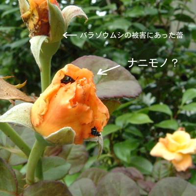 f0176353_1722469.jpg