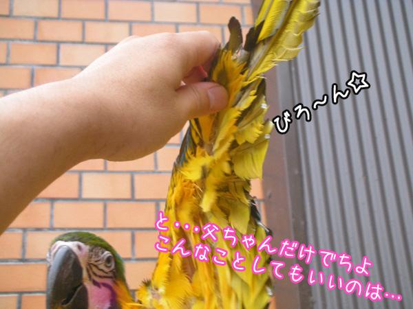 f0132055_8584473.jpg