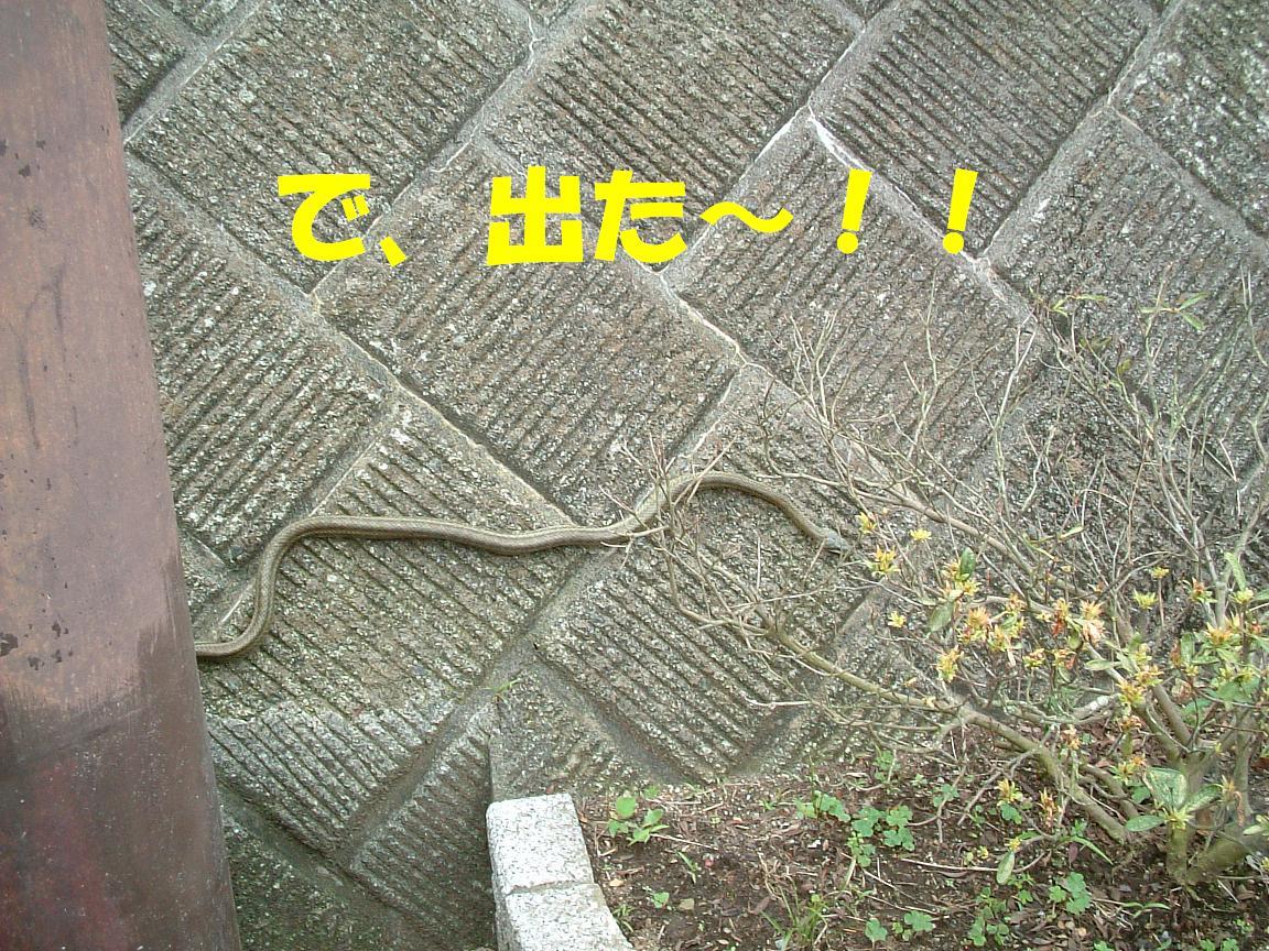 b0069163_22354449.jpg