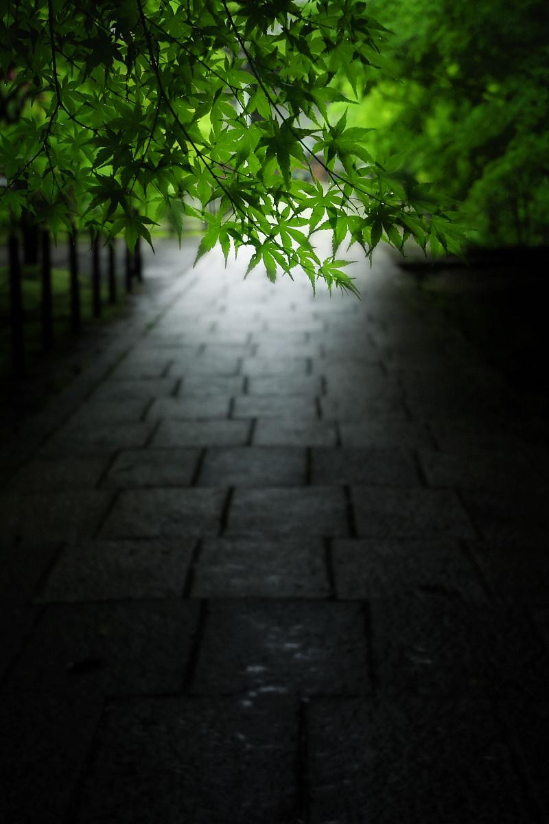 京都 西山三山 <光明寺> 1_f0021869_10434971.jpg