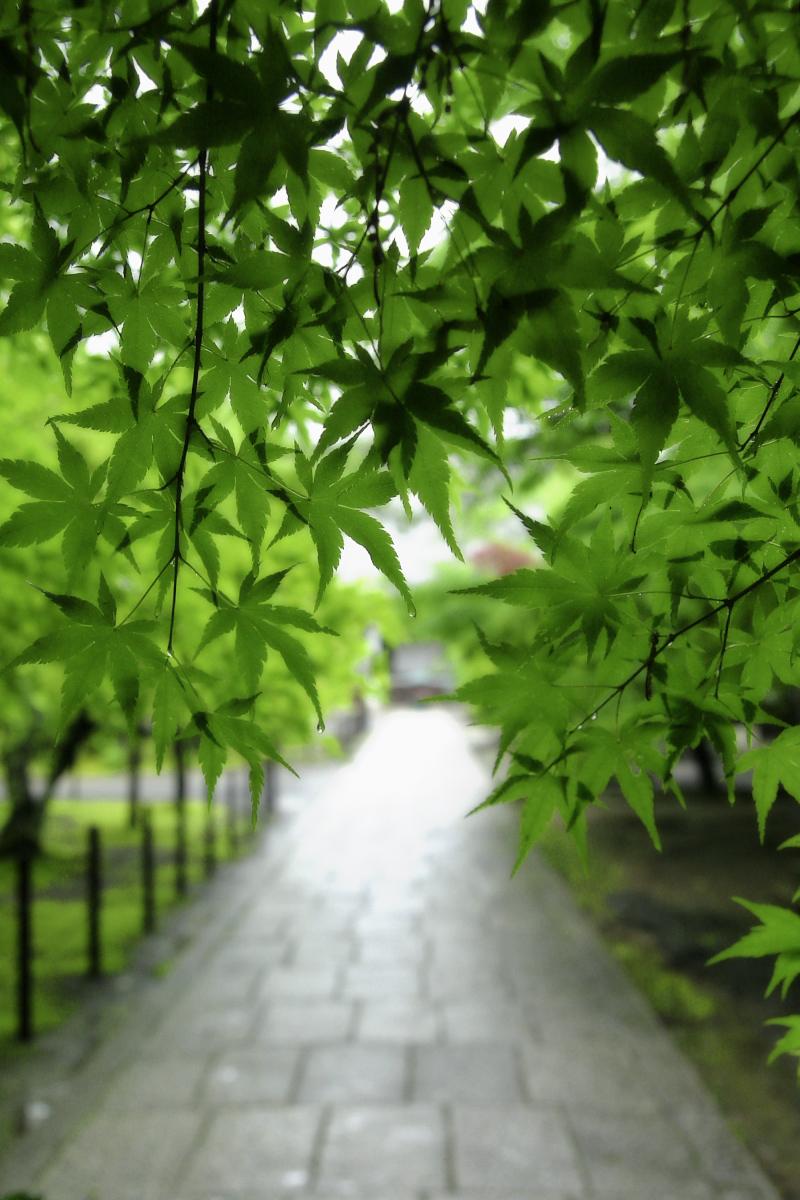 京都 西山三山 <光明寺> 1_f0021869_10441964.jpg